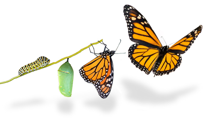 Butterfly-Transformation[1]